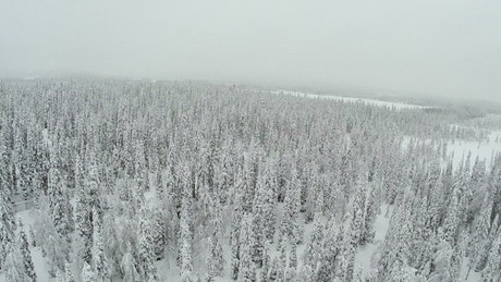 Winter forest and deep snow