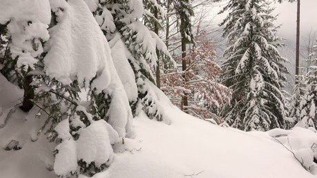Winter forest covered in snow