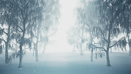 Winter forest while snowing, 3D loop animation