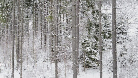 Winter forest with trees with empty branches