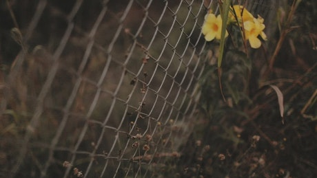 Wire fence with yellow flowers