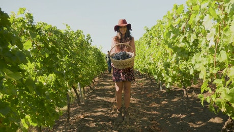 Woman holding a basket in a vineyard