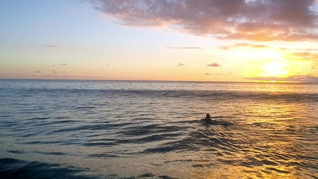 Woman paddles surfboard into sunset on calm sea