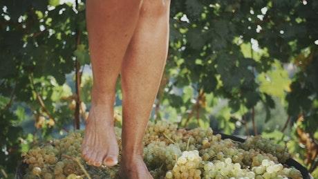 Woman pressing grapes