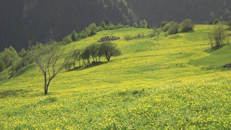 Woman walking in a mountain valley