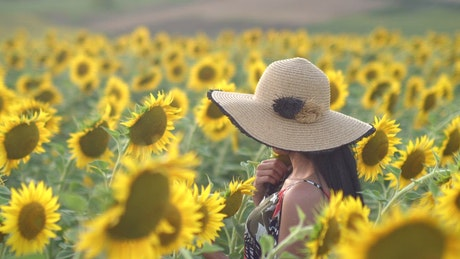 Woman walking in a sunflower field