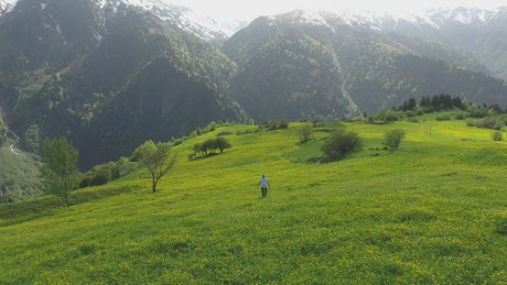 Woman walking in alpine meadows