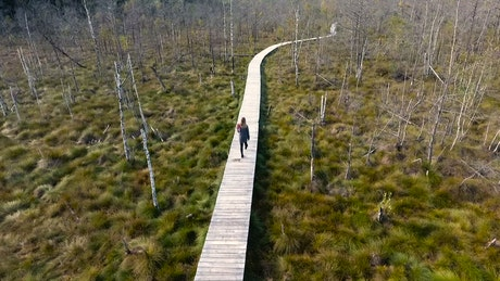 Woman walking on a wooden path in the swamp