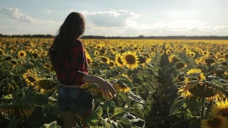 Woman walking through a huge field of sunflowers