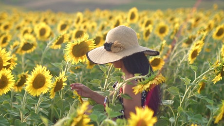Woman walking through a sunflower field in the morning