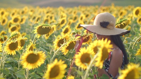 Woman walking through the sunflower plantation