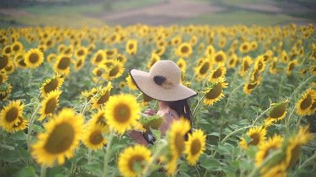 Woman wearing a hat walk through a sunflower field