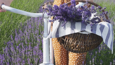Woman with a bike in the lavender field