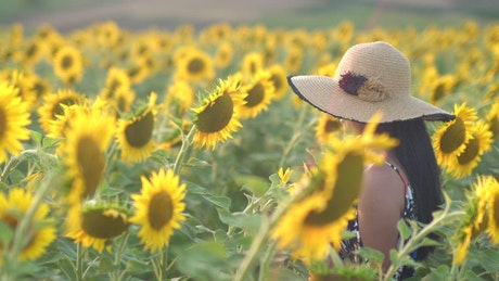 Woman with a hat on a sunflower field