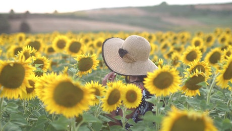 Woman with a hat walks in a sunflower field