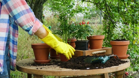 Woman with yellow gloves doing gardening chores
