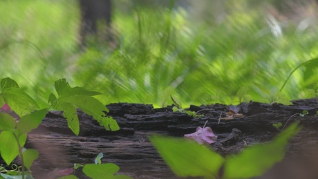 Wooden log at a forest with green nature