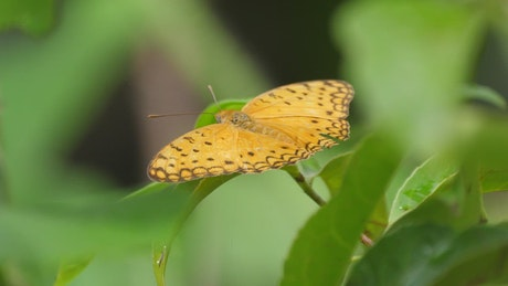 Yellow butterfly on a green leaf