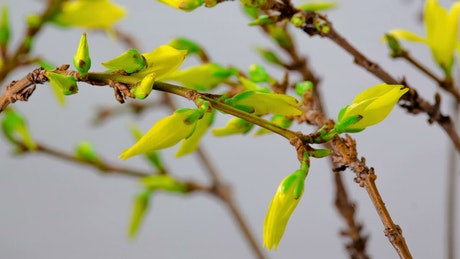 Yellow flowers blooming on the branches of a tree