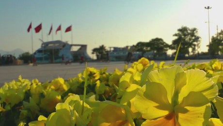 Yellow flowers in a park by a harbor