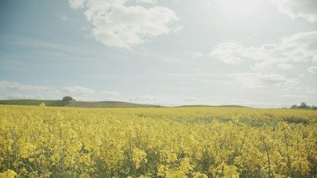 Yellow flowers under a summer sky