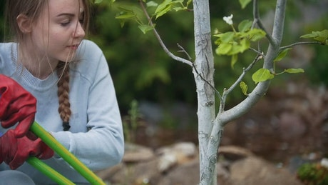 Young woman cutting the branch of a small tree