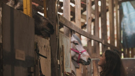 Young woman feeding a big horse in the stable