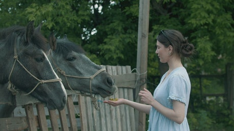 Young woman feeding grey horses in the farm