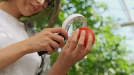 Young woman looks at a tomato through a magnifying glass
