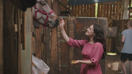 Young woman petting a horse at the stable