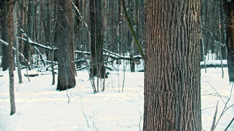 Young woman putting her ski next to a tree in the forest