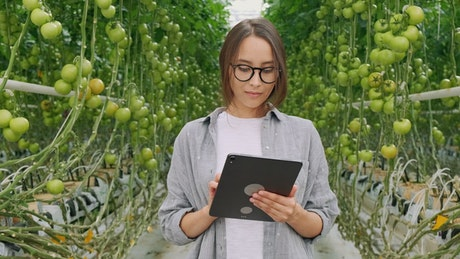 Young woman stands in hydro greenhouse on tablet