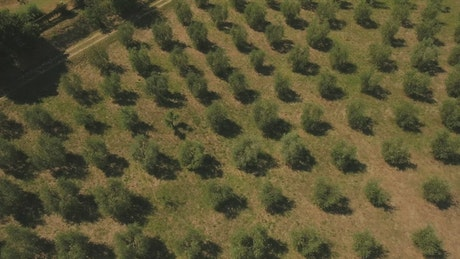 Zooming out from an olive field